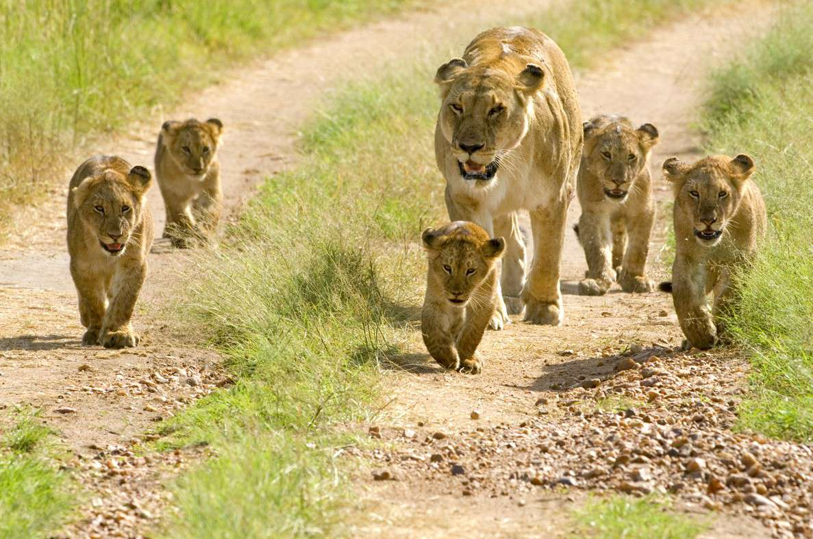 5 Lake Manyara / Serengeti Plains / Ngorogoro Crater 5 Days Wildlife