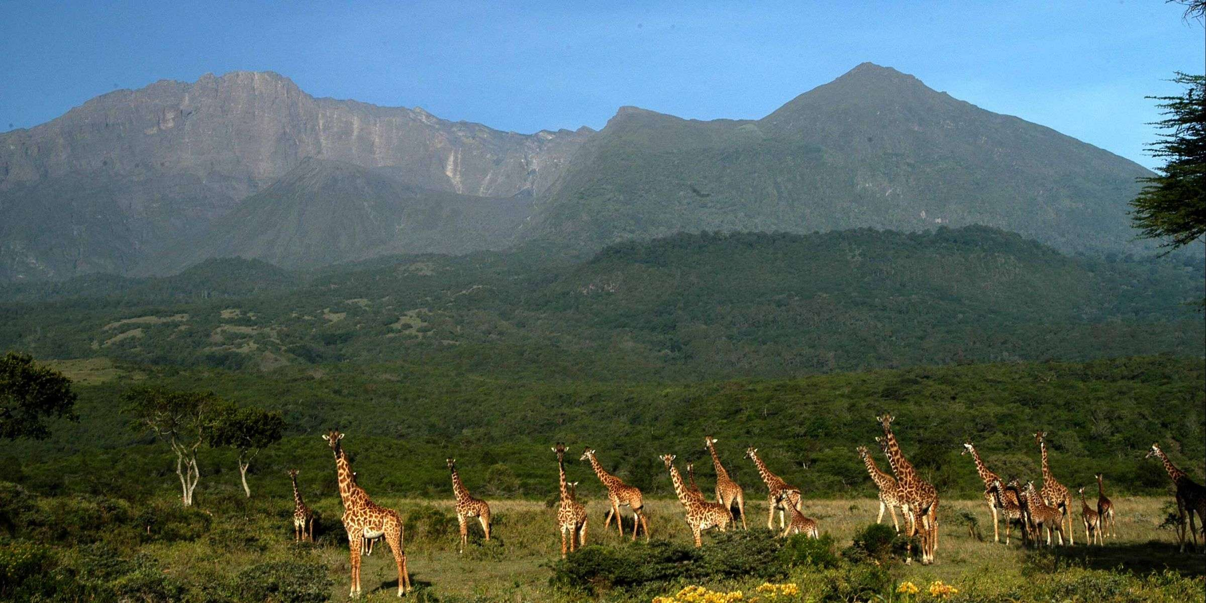 Arusha National Park / Lake Manyara / Tarangire 1 Days Wildlife