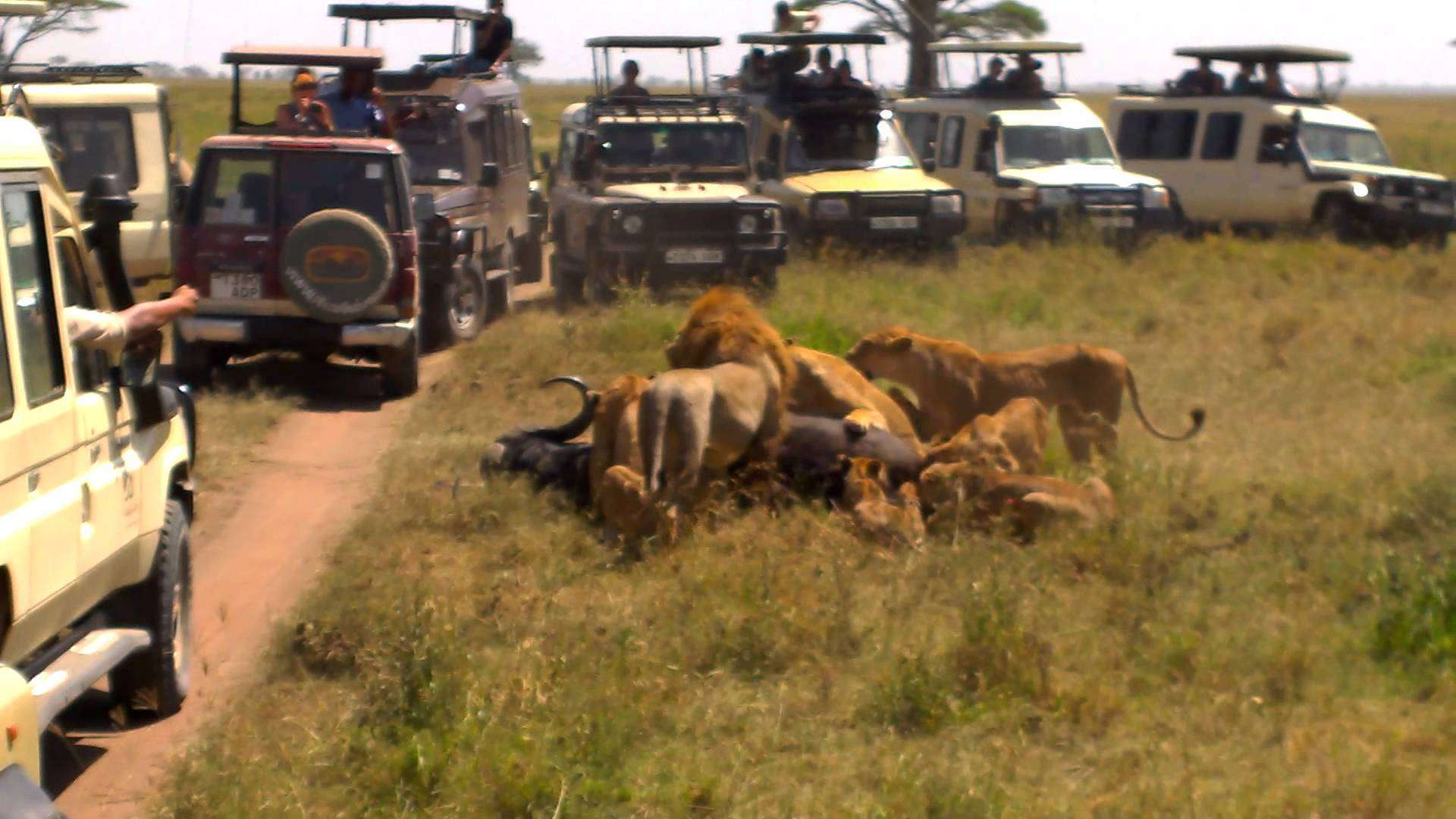 Lake Manyara / Ngorogoro Crater 2 Days Wildlife