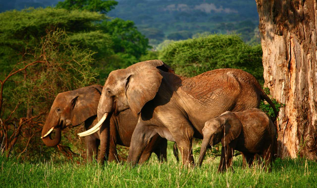 Lake Manyara / Ngorogoro Crater / Tarangire National Park  3 Days  Wildlife