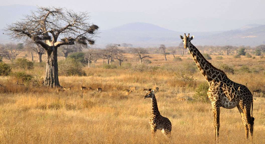 Lake Manyara / Serengeti Plains / Ngorogoro Crater / Tarangire  7 Days  Wildlife