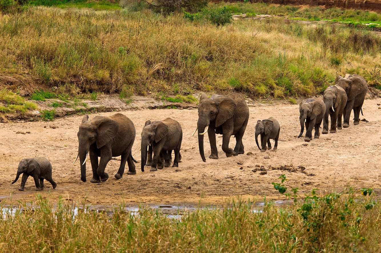 Lake Manyara / Serengeti Plains / Ngorogoro Crater  4 Days  Wildlife