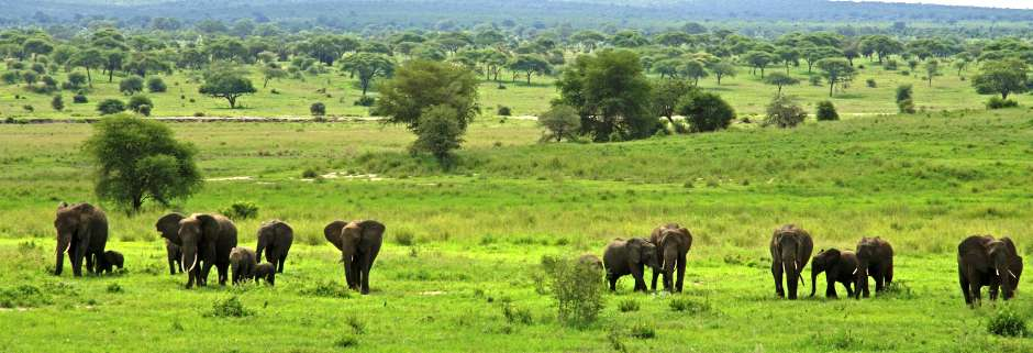 Lake Manyara / Serengeti Plains / Ngorogoro Crater / Tarangire  6 Days  Wildlife